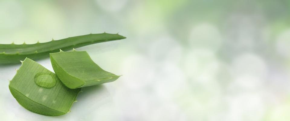 NaturLOCK Aloe-Vera